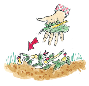 Compost Biologique fait maison